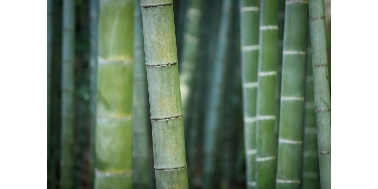 Górcső alatt a bambusz fehérnemű